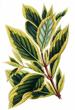 botanika: Barevné ilustrace květin v akvarelů Reklamní fotografie