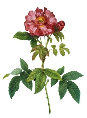 toned: flower illustration Stock Photo