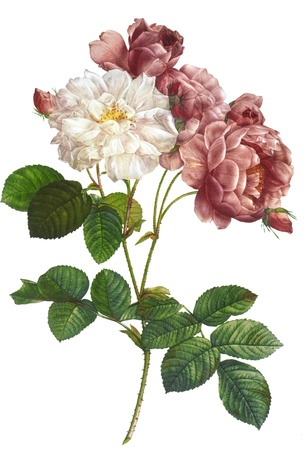 painted: flower illustration Stock Photo