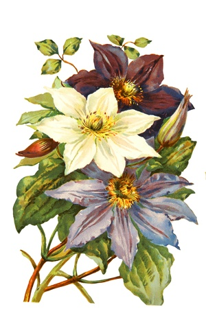 flora: Color illustration of flowers in watercolor paintings