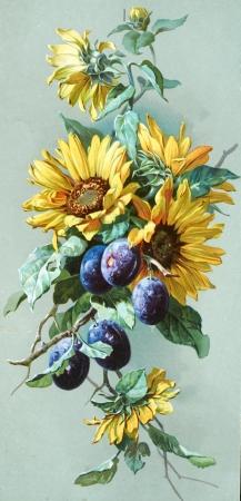 vieille illustration botanique Banque d'images