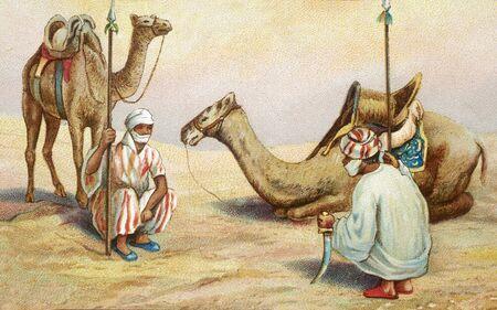 oasis: dromedary old illustration