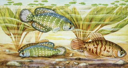 under water: fish illustration