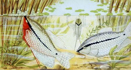 fish illustration illustration