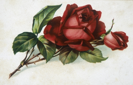 watercolour painting: flowers illustration
