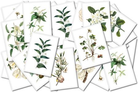 herbarium: collage with floral images