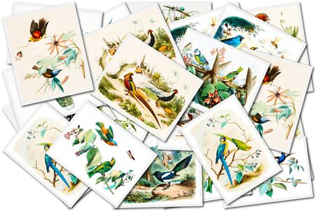 ornithologist: collage with bird images