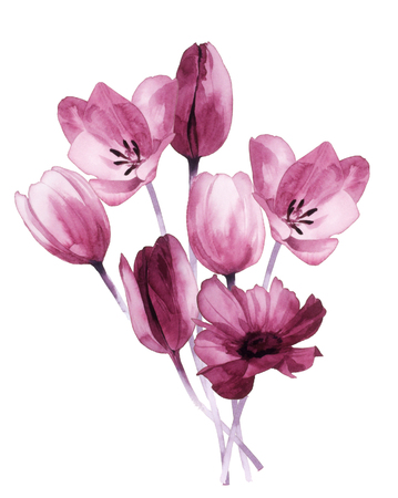 colorful flowers: Color illustration of flowers in watercolor paintings