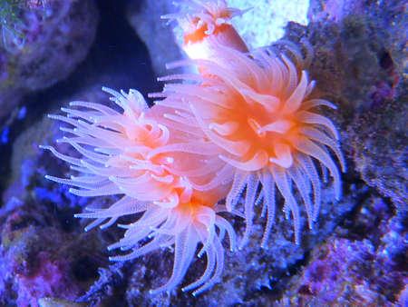 anemones: Anemones