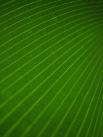 green: green Stock Photo