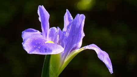 adaptable: iris