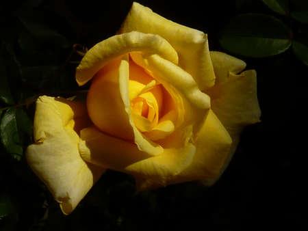 vows: valentine s day