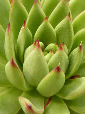 succulent plant Stock Photo - 102867836