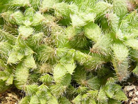 Succulent plant Stock Photo