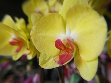 Orchid plants are widely distributed throughout the world Stock Photo