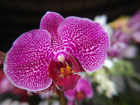 Orchid plants are widely distributed throughout the world Stock Photo - 113033399