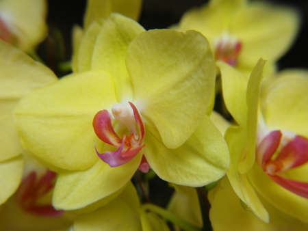 Orchid plants are widely distributed throughout the world Stock Photo - 113033396