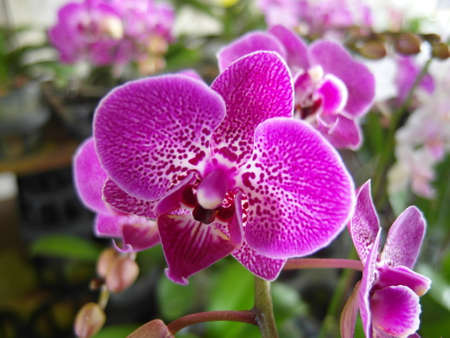 Orchid plants are widely distributed throughout the world Stock Photo - 113033404