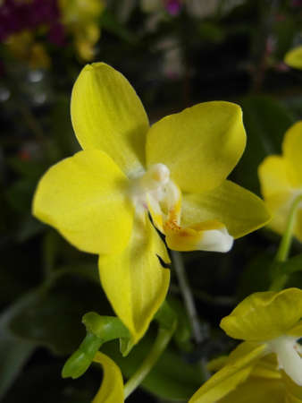 Orchid plants are widely distributed throughout the world Stock Photo - 113033408