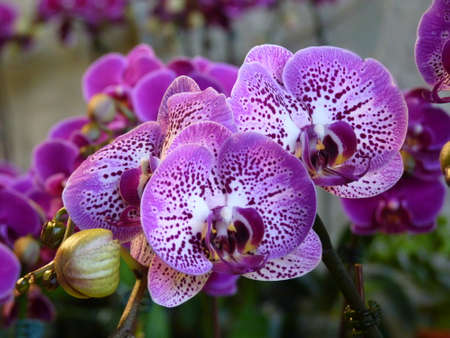 a wide variety of orchids
