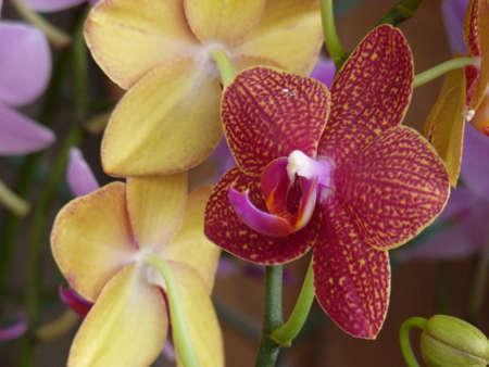 A closeup shot of cute orchids under the sunlight
