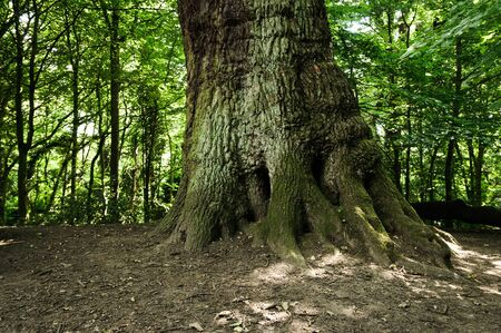 Tree trunk in the forest