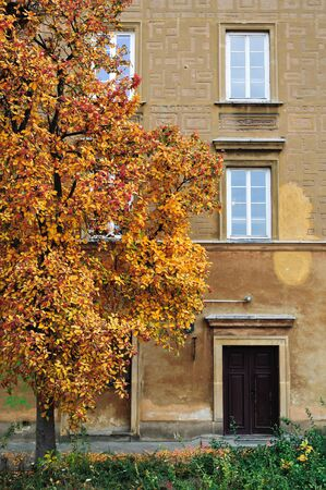 Tree with yellow orange leaves in old town of Warsaw