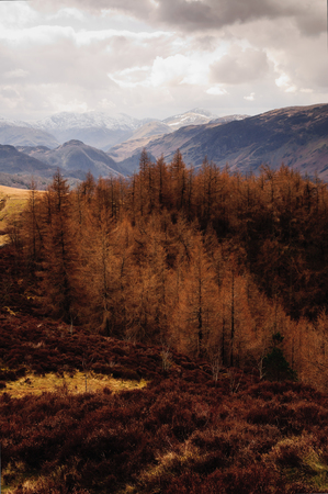 View of mountains and conifer trees in Derwentwater, Lake district 免版税图像