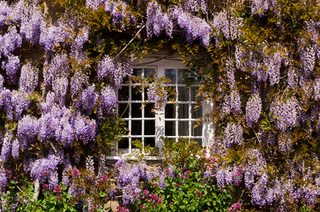 Traditional country cottage window decorated with pants and flowers Фото со стока