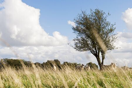 Farm with sheep grazing in british countryside Фото со стока
