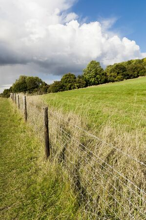 Green fields in British countryside 免版税图像