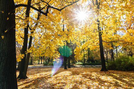 Tree with orange leaves during fall season in Lazienki park Warsaw Фото со стока