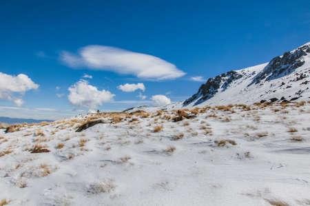 nevado: Snow and a tree in a place in Nevado de Toluca
