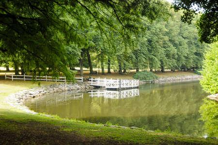 Les arbres verts et herbe dans un parc tr�s calme � proximit� d'une rivi�re