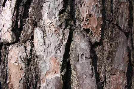 Bark of the tree photo