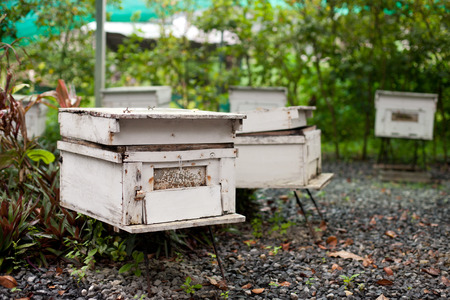 apiary: Apiary in the green garden