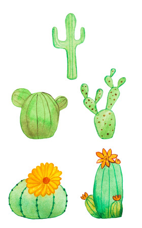 terrarium: Watercolor hand drawn cactus set. Isolated on white. Beautiful cute succulents with flowers. Ideal for sites, brochures, wedding invitation, card, banners etc