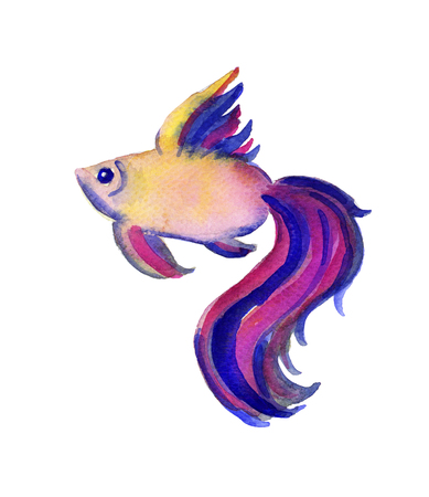oceanography: Beautiful watercolor vibrant picture of a fish with large tale isolated on white. Handdrawn art ideal for cards, textile, sites, brichures etc