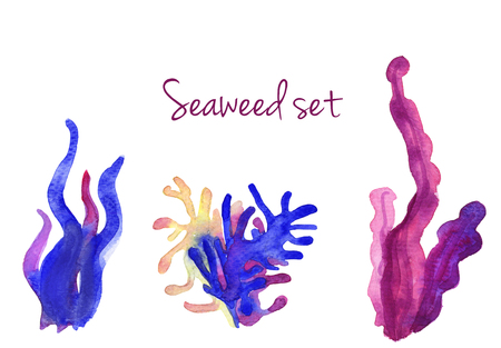 Beautiful watercolor vibrant set of underwater seaweed isolated on white. Handdrawn art ideal for cards, textile, sites, brichures etc Stock Photo