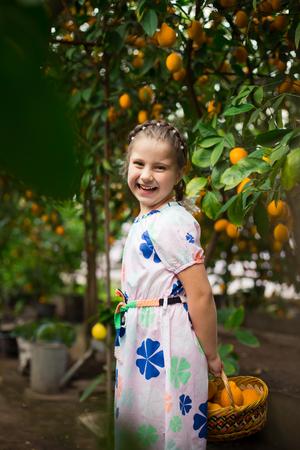 Beautiful little happy girl in lemon garden Lemonarium picking fresh ripe lemons in the wiker basket. Vertical portrait colorful image. Ideal for sites, advertising, web, banners etc 免版税图像