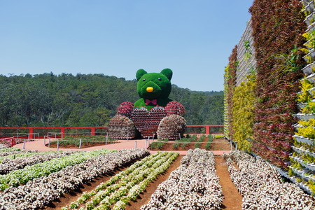 picturesque flower garden and place for visiting in Da Lat
