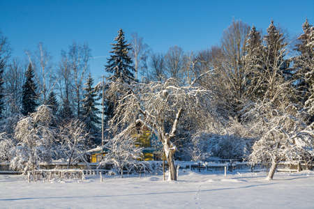 winter landscape. Sunny day. Winter decline. The bright colors. Simple landscape. Winter forest.  forest road. winter fild. scintillating snow. The abandoned apple garden and the old rural house.