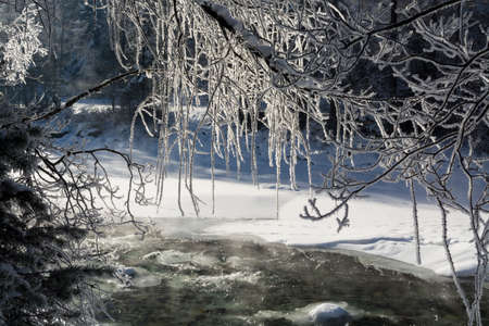 glint: winter branches of trees in hoarfrost glint in the sun. The fine winter mountains landscape. Sunny day. Stock Photo
