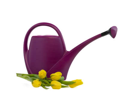 gallons: watering can and bouquet of yellow tulips
