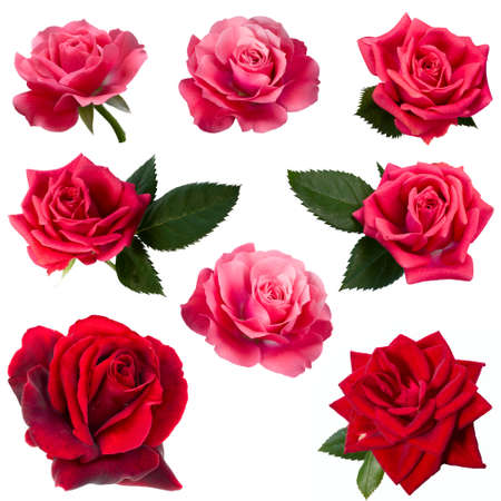 collage of eight red roses Stock Photo