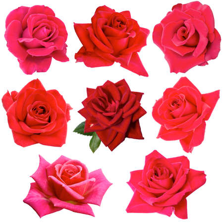 collage of eight red roses 版權商用圖片