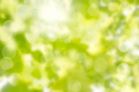 leaf abstract background with sun beams and flares photo