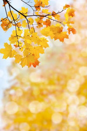 葉秋の抽象的な背景