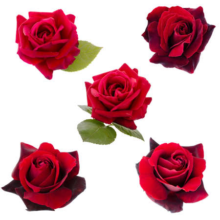 collage of five dark red roses