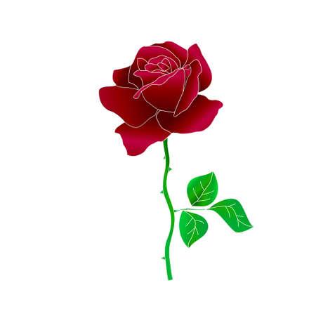 red rose 向量圖像